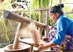 절구로 쌀을 도정하는 팸복 마을의 한 여인.