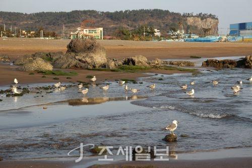 화순 금모래 해안