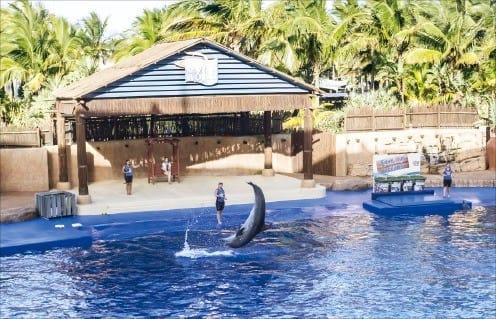 우샤카 마린 월드의 돌고래 쇼.
