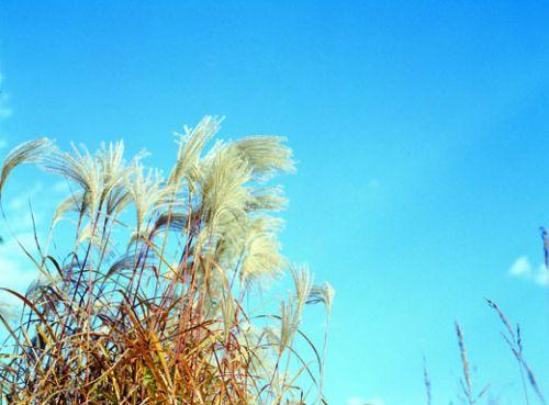 오늘 전국 날씨, 아침 기온 뚝 [사진: DB]