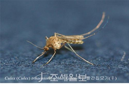 올해 첫 일본뇌염 환자 발생 <사진: 질병관리본부 제공>