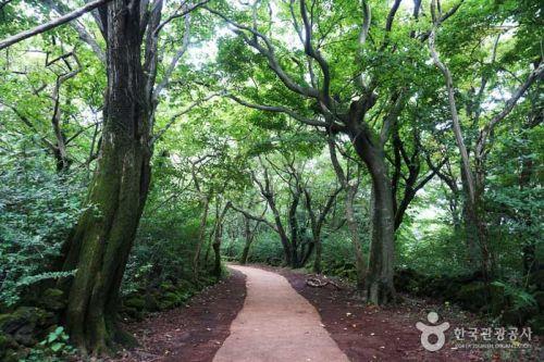제주돌문화공원 산책로