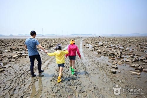 가까운 갯벌에서 체험할 때는 걸어간다.