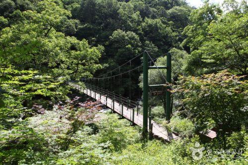 공작산생태숲 산소길의 귕소출렁다리