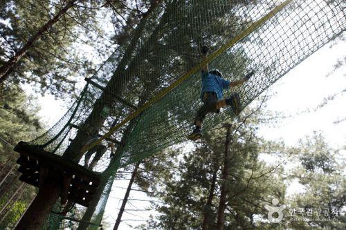 두루웰숲속문화촌에는 짚라인, 외나무다리 등으로 구성된 에코어드벤처가 아이들의 모험심을 길러준다.