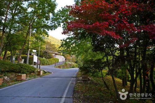 가을의 길목에 들어선 오서산자연휴양림